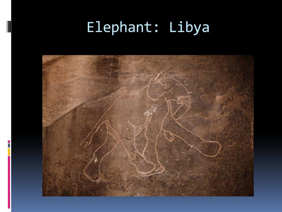 Elephant: Libya
