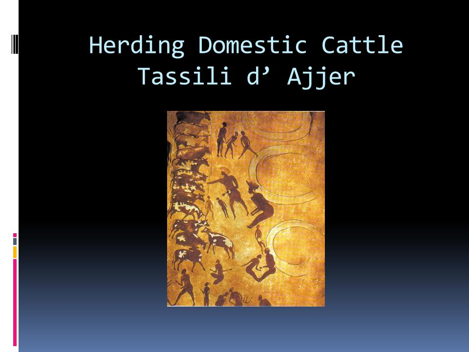 Herding Domestic Cattle Tassili d' Ajjer