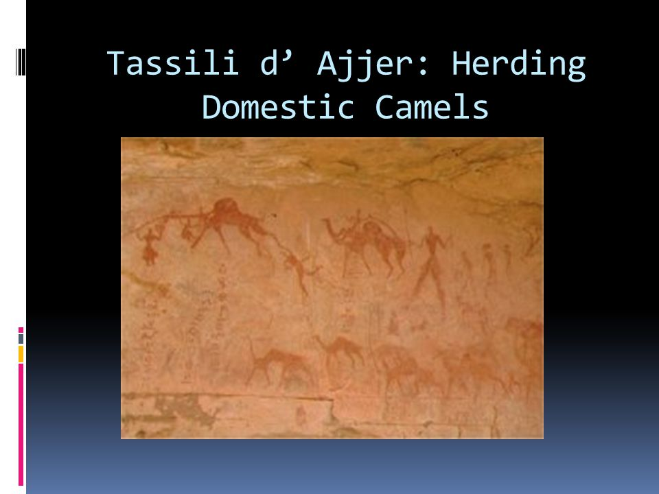 Tassili d' Ajjer: Herding Domestic Camels