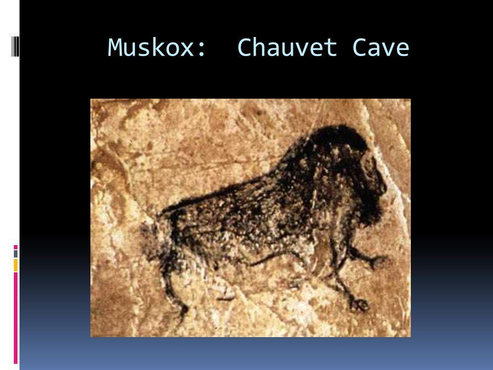 Muskox: Chauvet Cave