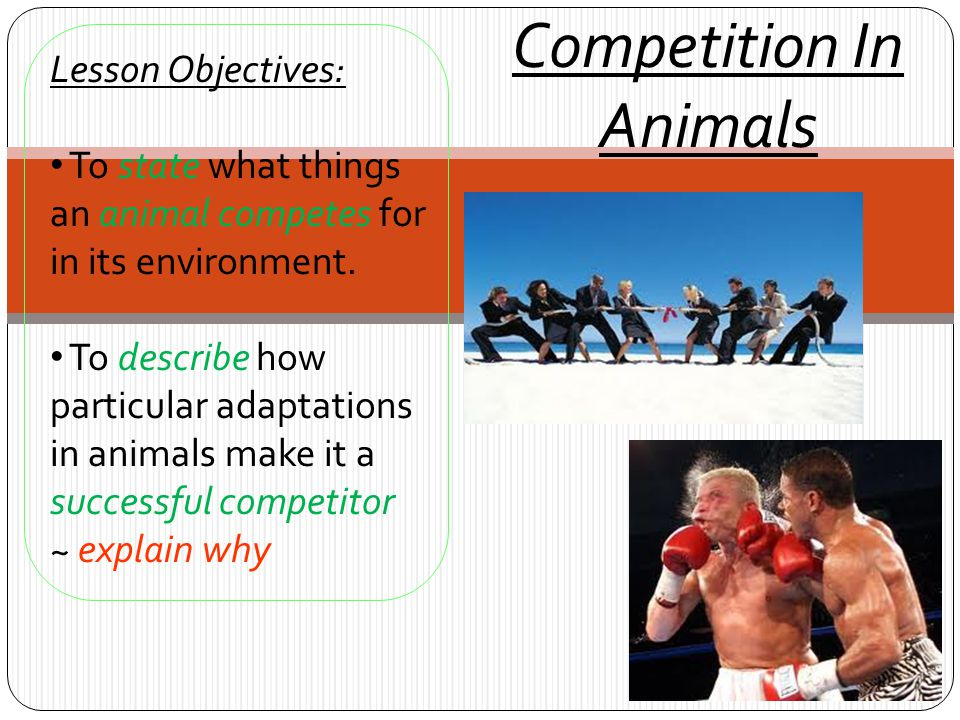 Competition In Animals