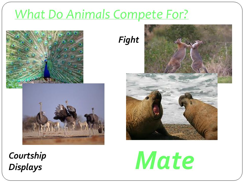 What Do Animals Compete For