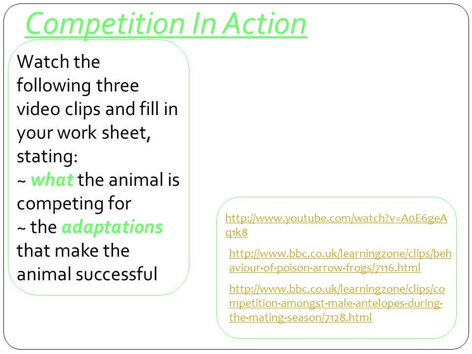 Competition In Action Watch the following three video clips and fill in your work sheet, stating: ~ what the animal is competing for.