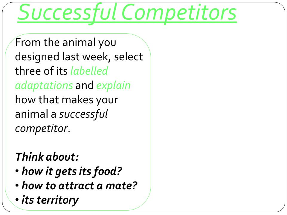 Successful Competitors