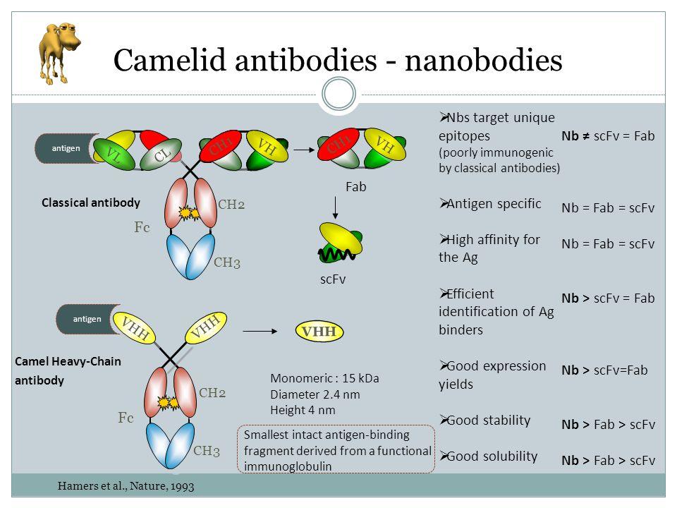 Camelid antibodies - nanobodies
