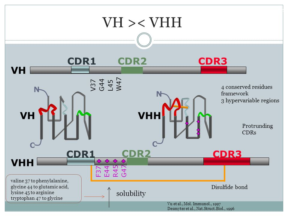 VH >< VHH CDR1 CDR2 CDR3 VH VH VHH CDR2 CDR1 CDR3 VHH N N C C