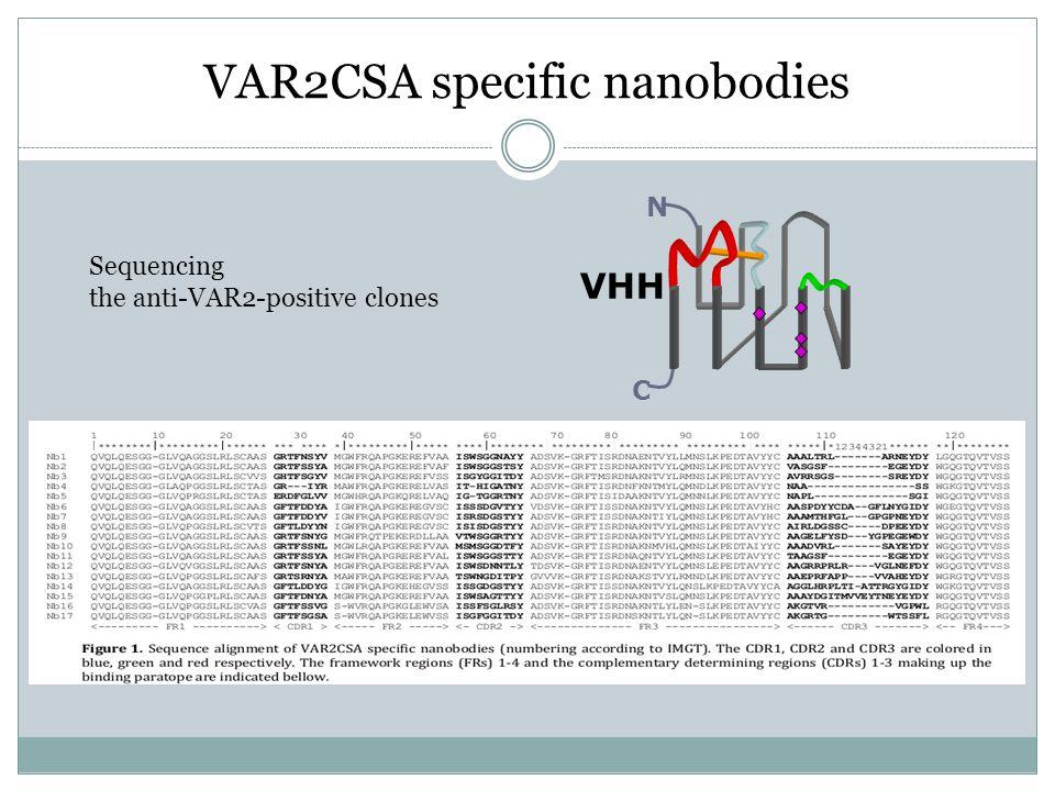 VAR2CSA specific nanobodies