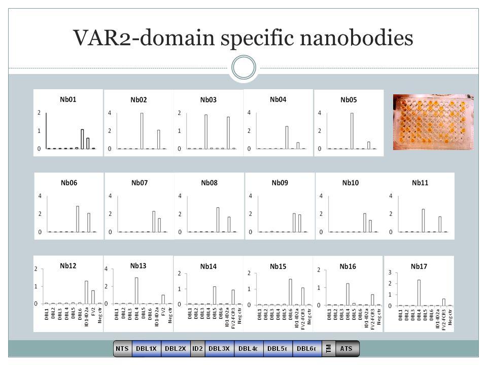 VAR2-domain specific nanobodies
