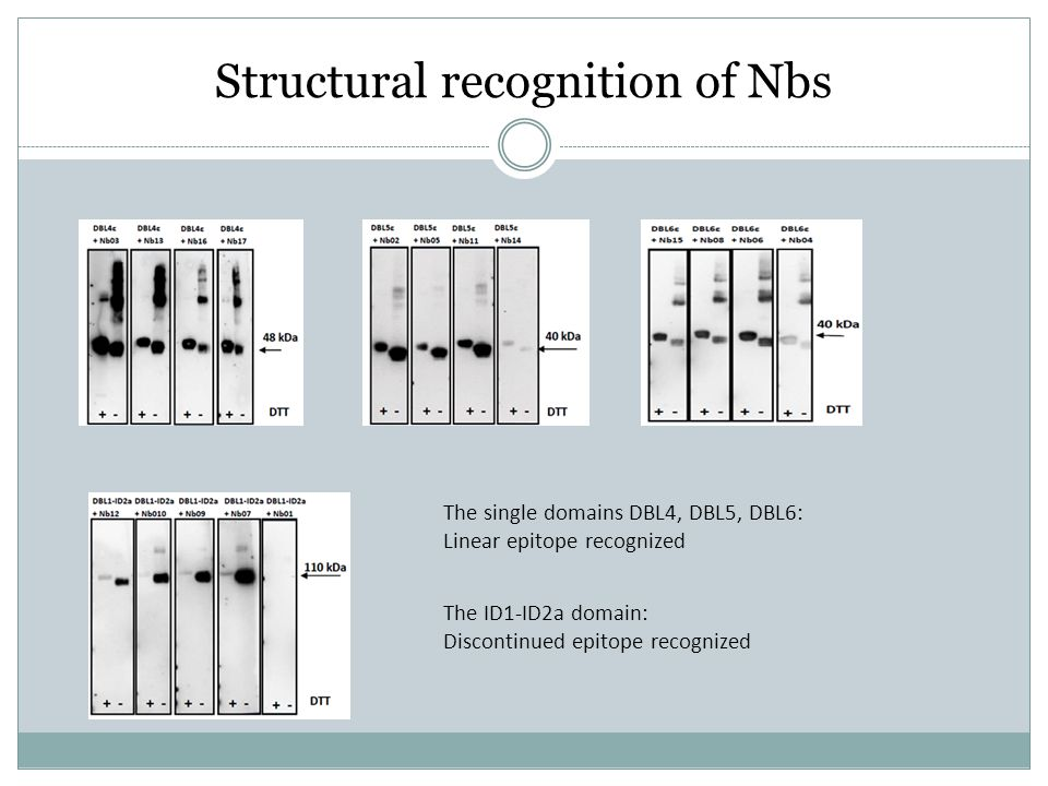 Structural recognition of Nbs