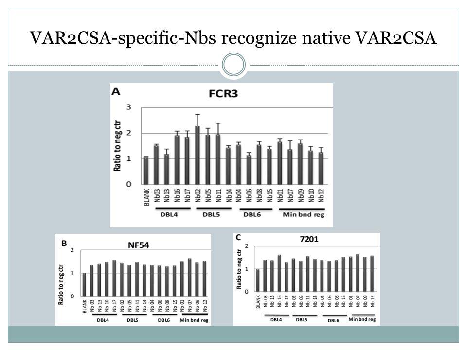 VAR2CSA-specific-Nbs recognize native VAR2CSA
