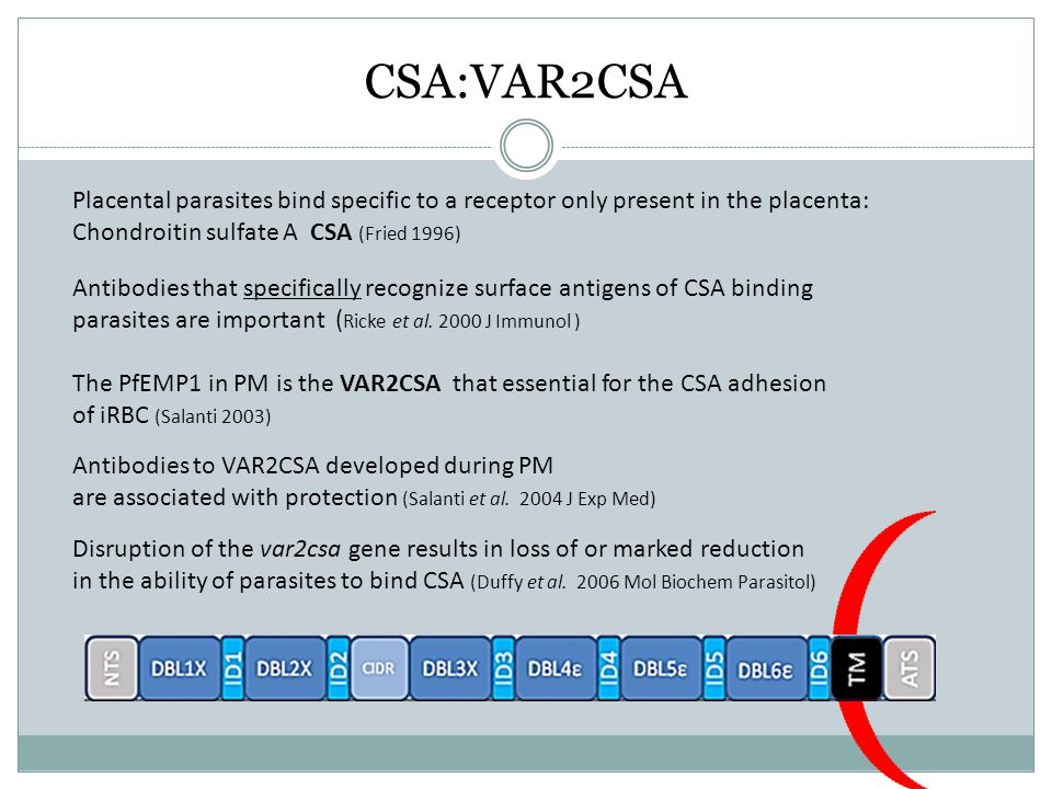CSA:VAR2CSA Placental parasites bind specific to a receptor only present in the placenta: Chondroitin sulfate A CSA (Fried 1996)