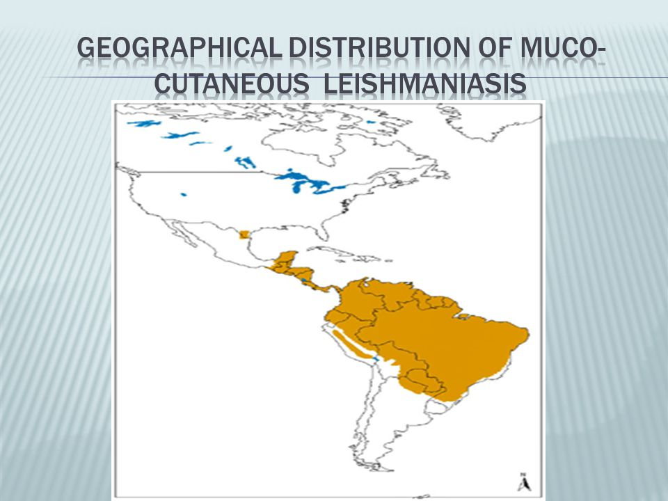 Geographical distribution of muco-cutaneous leishmaniasis