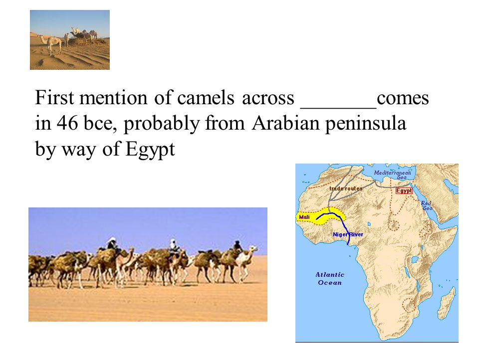 First mention of camels across _______comes in 46 bce, probably from Arabian peninsula by way of Egypt