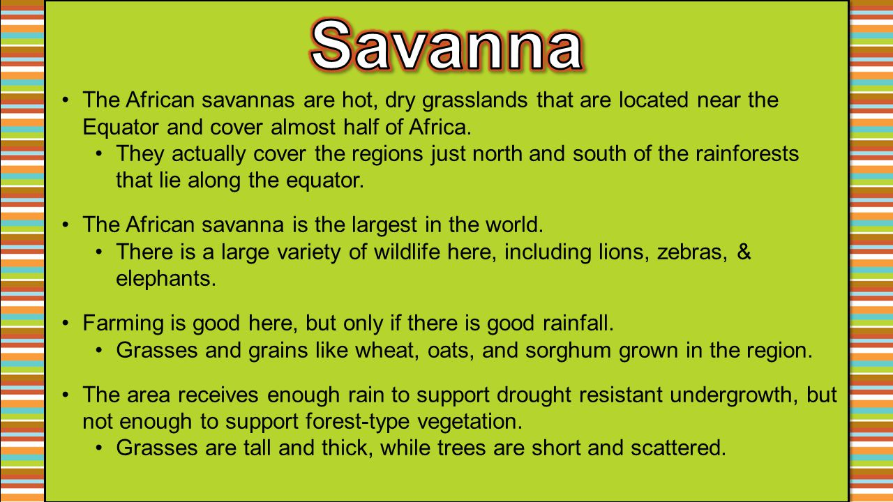 Savanna The African savannas are hot, dry grasslands that are located near the Equator and cover almost half of Africa.