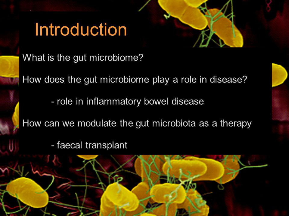 Introduction What is the gut microbiome