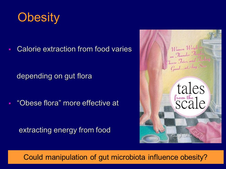 Could manipulation of gut microbiota influence obesity