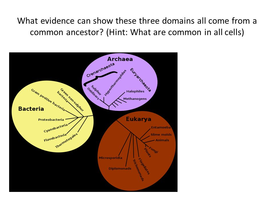 What evidence can show these three domains all come from a common ancestor.