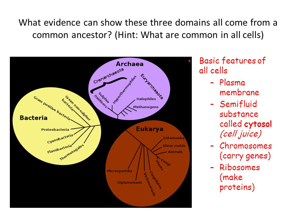 What evidence can show these three domains all come from a common ancestor (Hint: What are common in all cells)