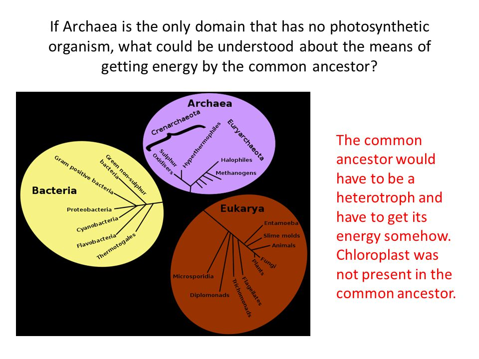 If Archaea is the only domain that has no photosynthetic organism, what could be understood about the means of getting energy by the common ancestor