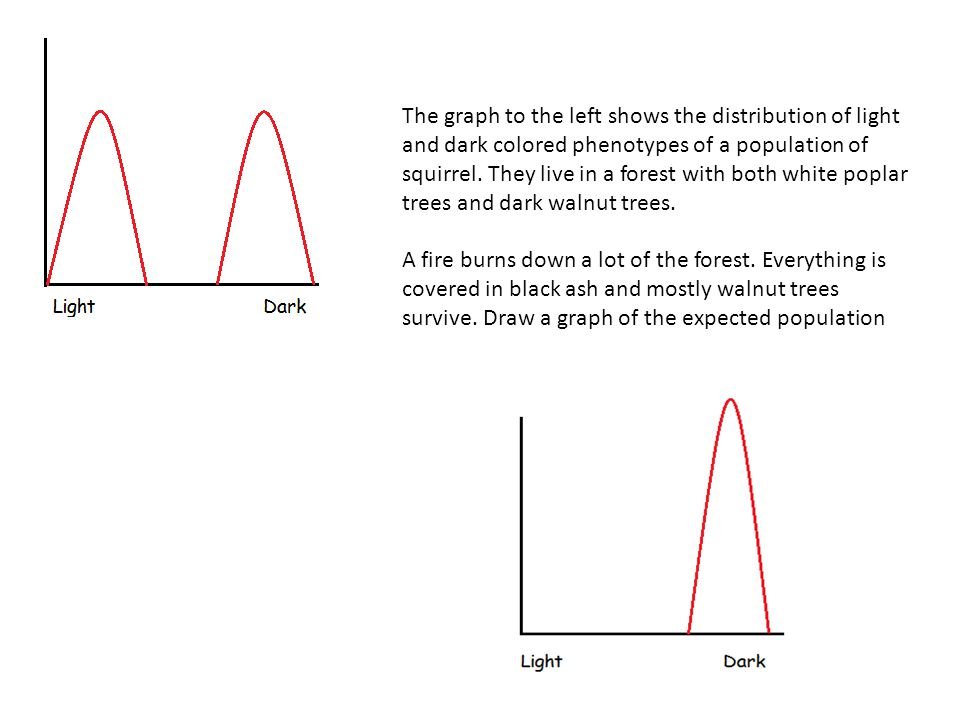 The graph to the left shows the distribution of light and dark colored phenotypes of a population of squirrel. They live in a forest with both white poplar trees and dark walnut trees.