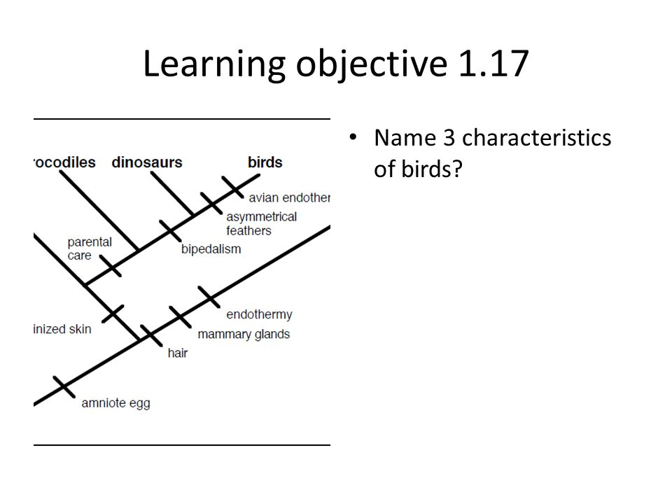 Learning objective 1.17 Name 3 characteristics of birds
