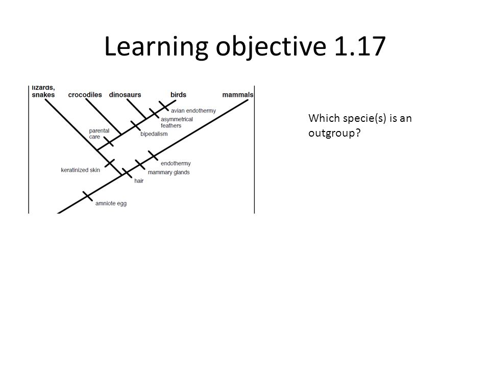Learning objective 1.17 Which specie(s) is an outgroup