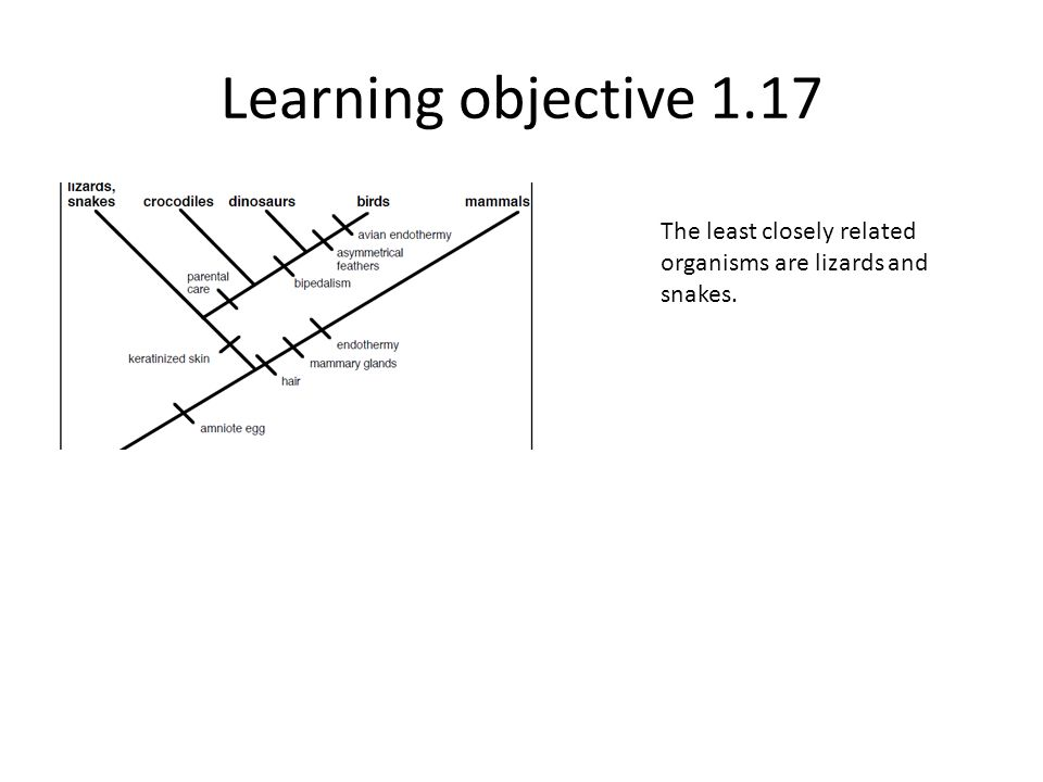 Learning objective 1.17 The least closely related organisms are lizards and snakes.