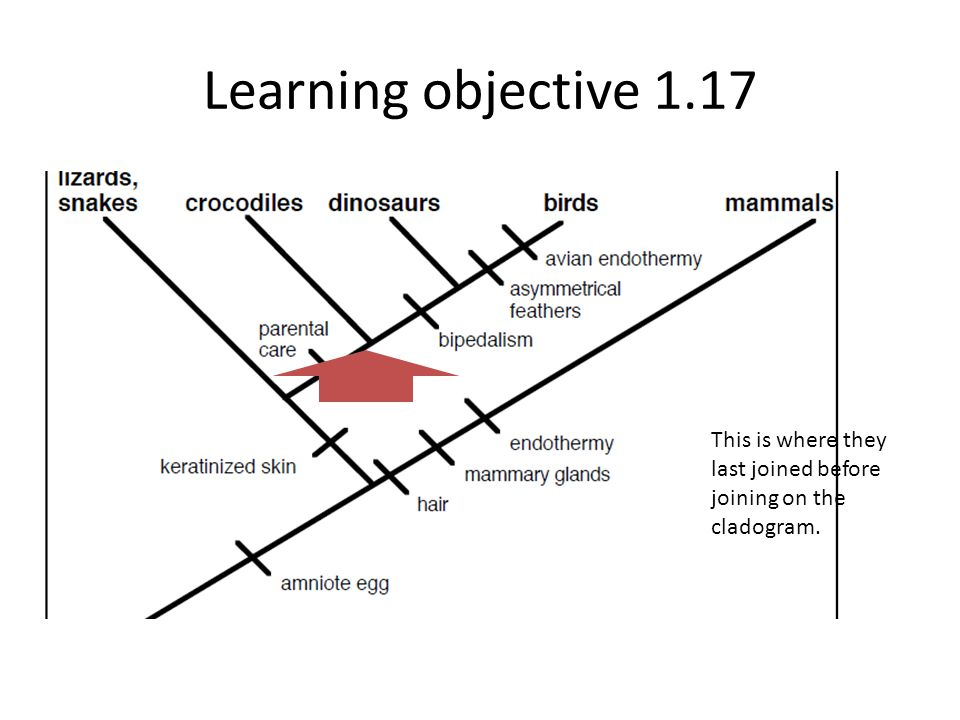 Learning objective 1.17 This is where they last joined before joining on the cladogram.