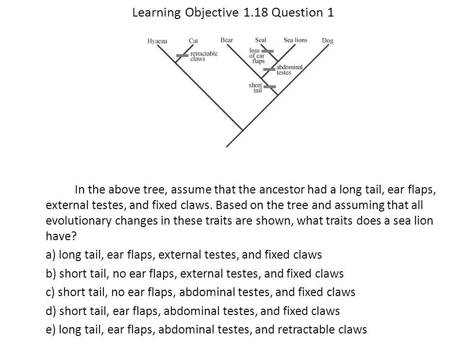 Learning Objective 1.18 Question 1