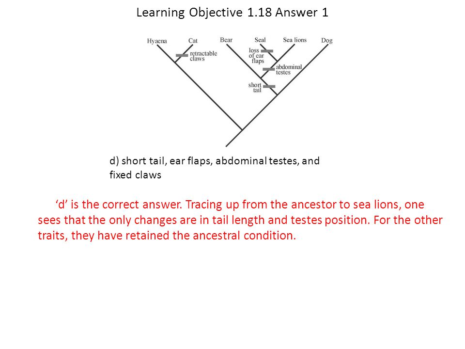 Learning Objective 1.18 Answer 1