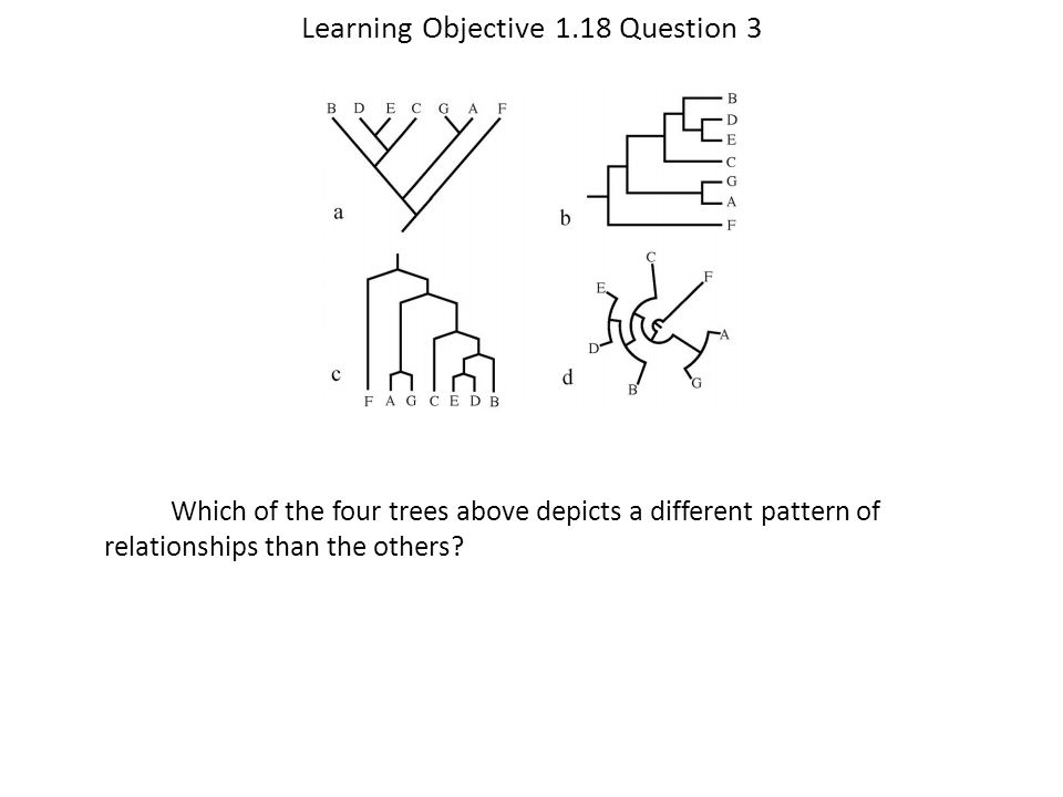 Learning Objective 1.18 Question 3