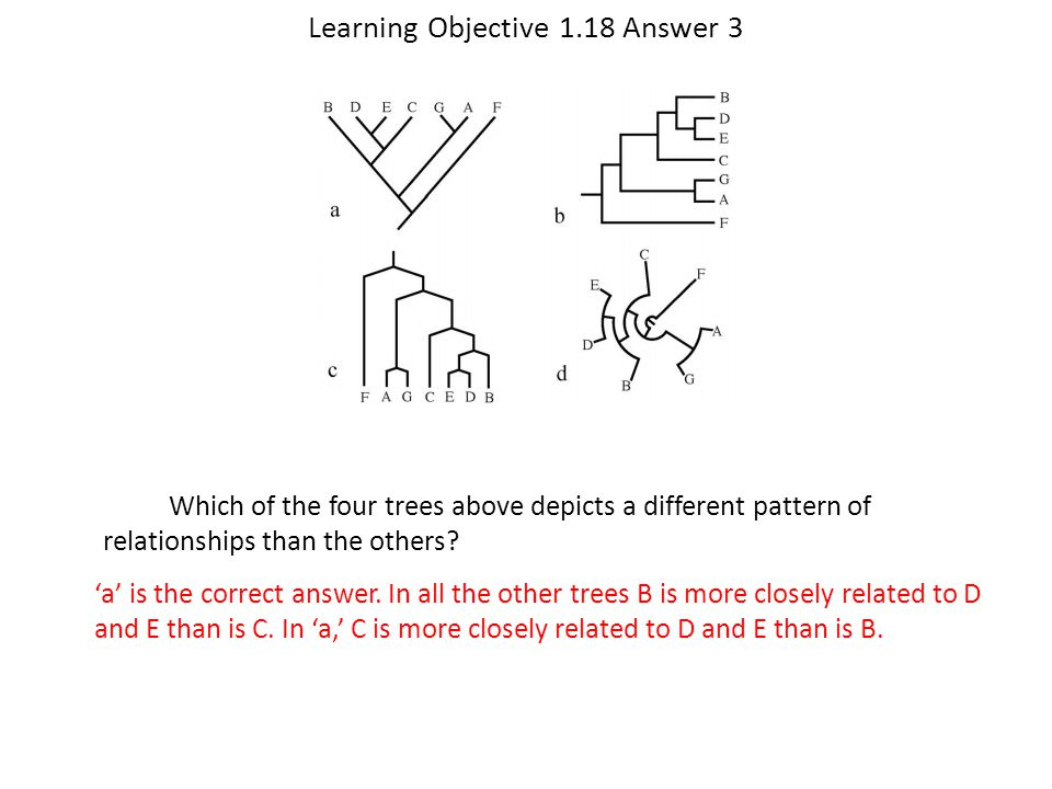 Learning Objective 1.18 Answer 3