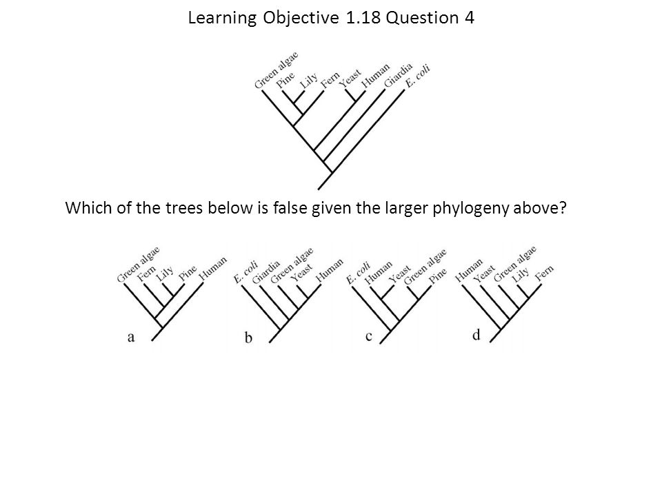 Learning Objective 1.18 Question 4