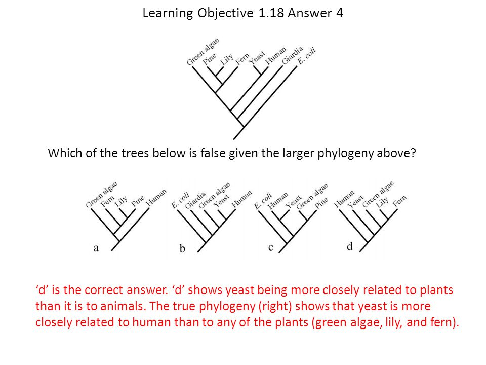 Learning Objective 1.18 Answer 4