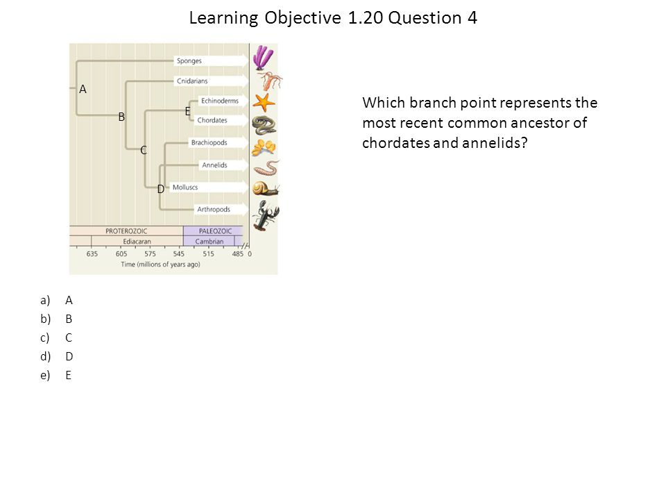 Learning Objective 1.20 Question 4