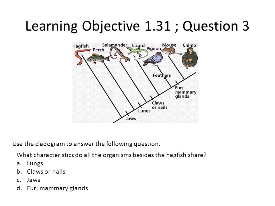 Learning Objective 1.31 ; Question 3