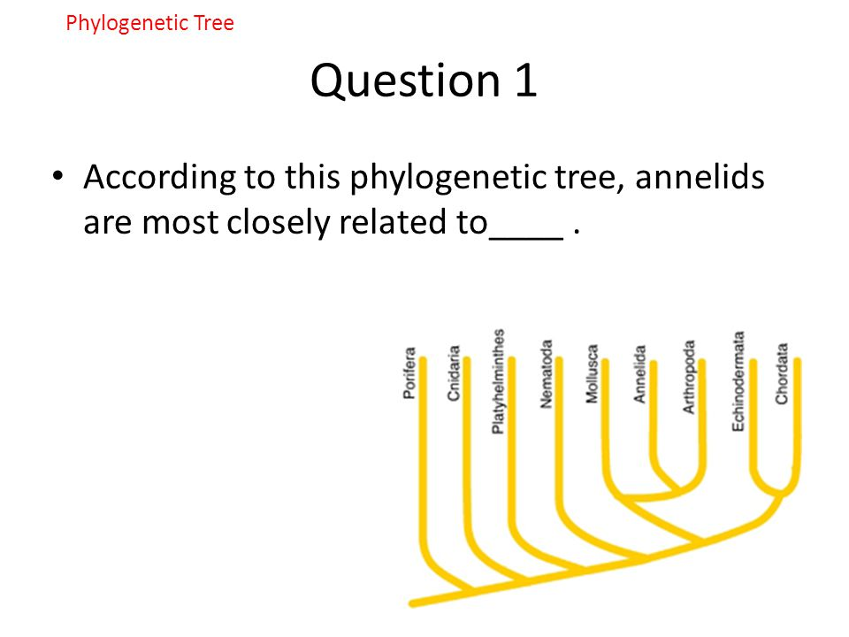 Phylogenetic Tree Question 1.