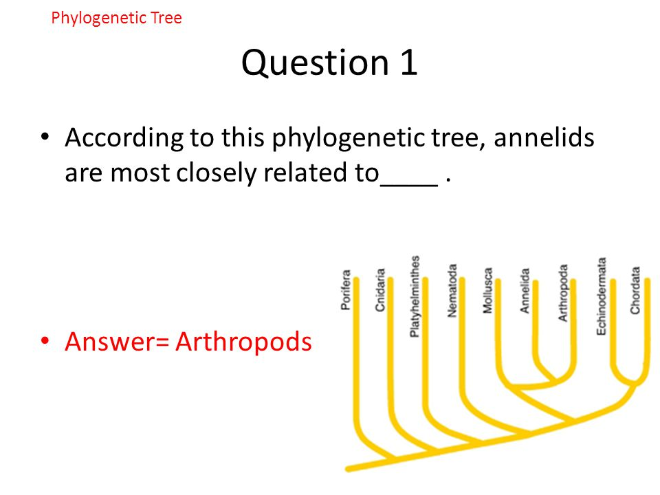 Phylogenetic Tree Question 1. According to this phylogenetic tree, annelids are most closely related to____ .