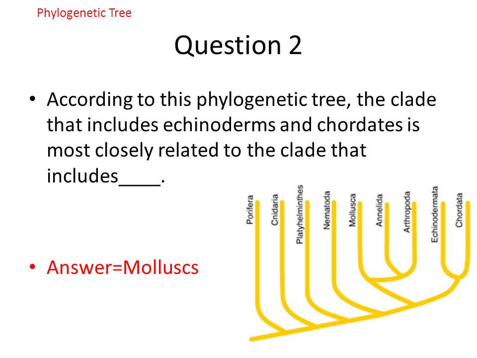 Phylogenetic Tree Question 2.