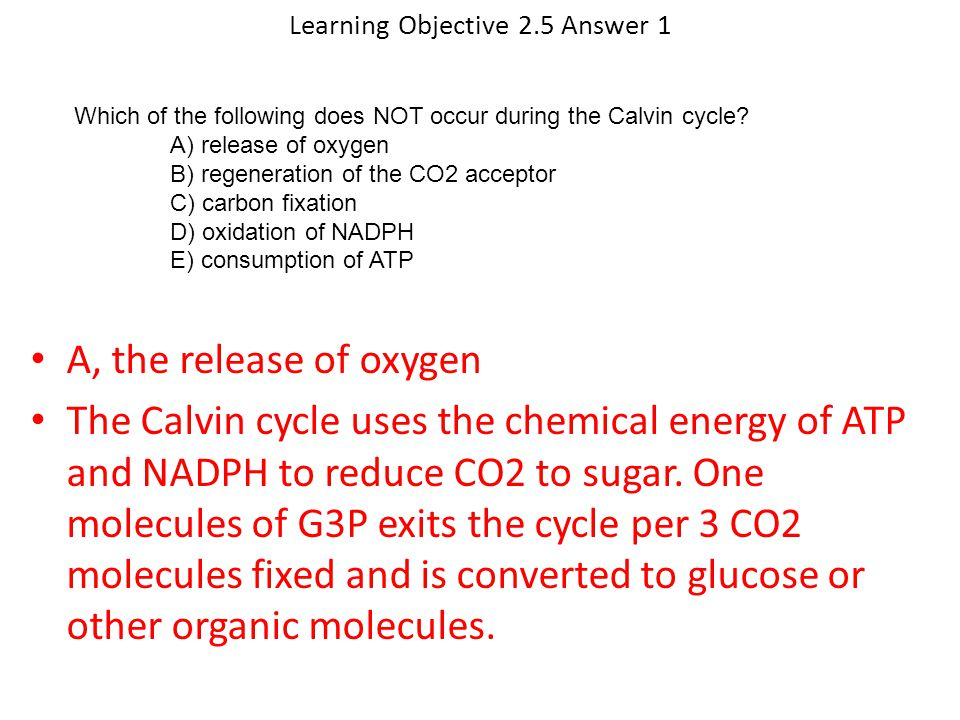 Learning Objective 2.5 Answer 1