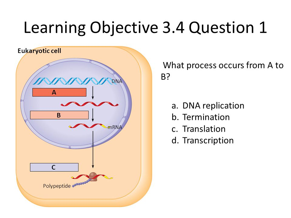 Learning Objective 3.4 Question 1