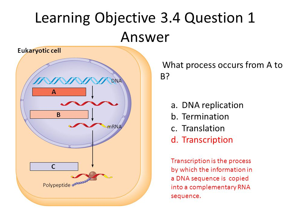 Learning Objective 3.4 Question 1 Answer