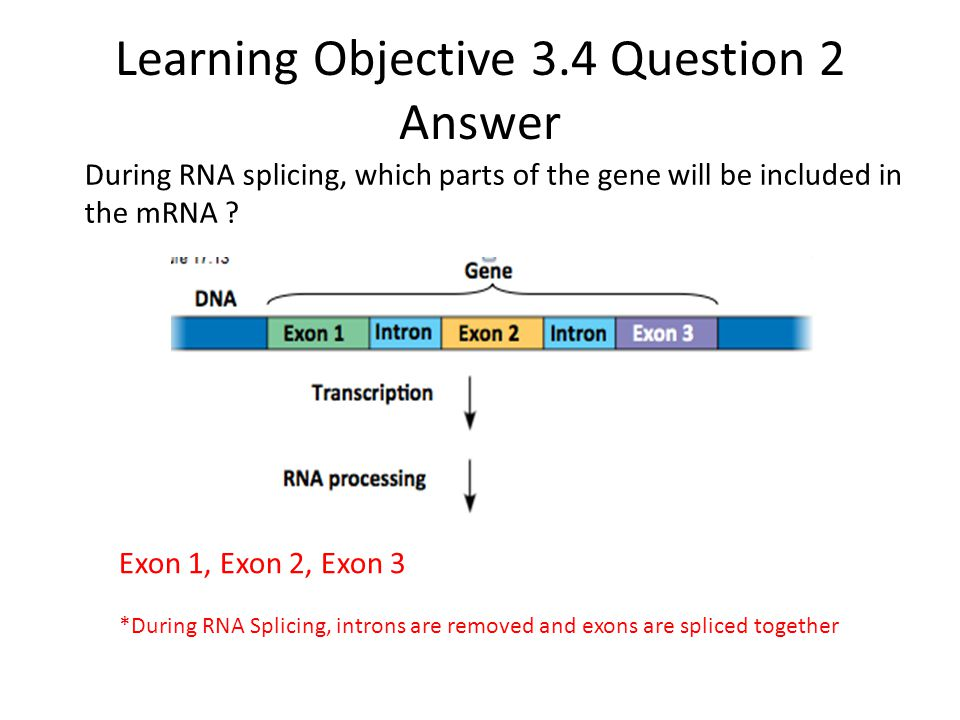 Learning Objective 3.4 Question 2 Answer