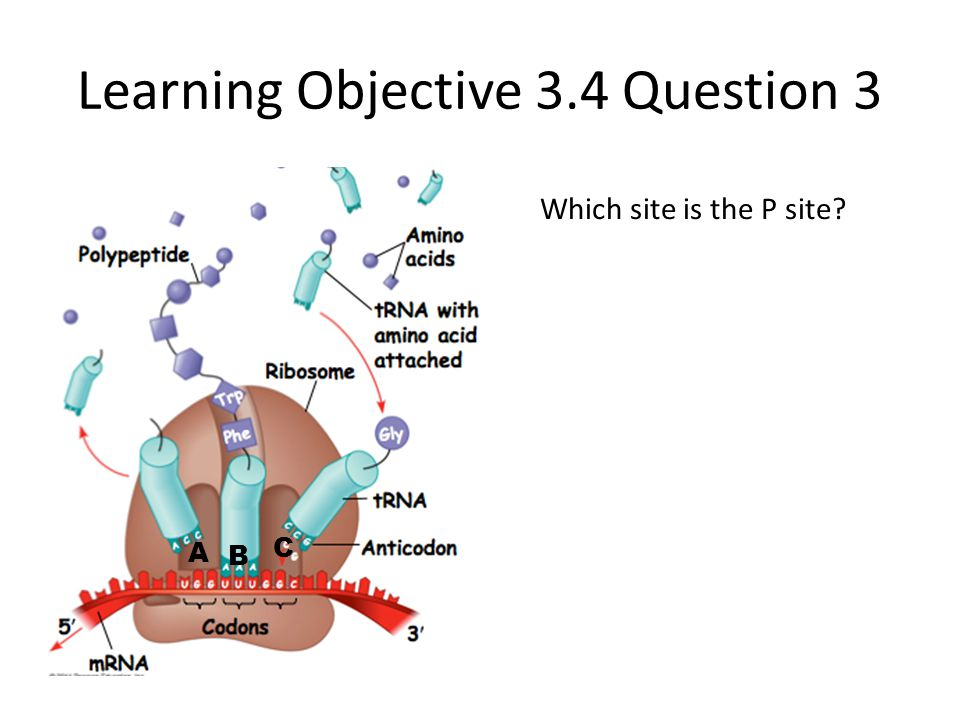 Learning Objective 3.4 Question 3