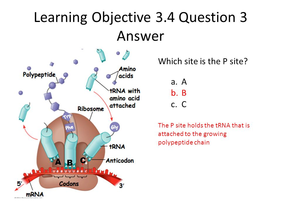 Learning Objective 3.4 Question 3 Answer