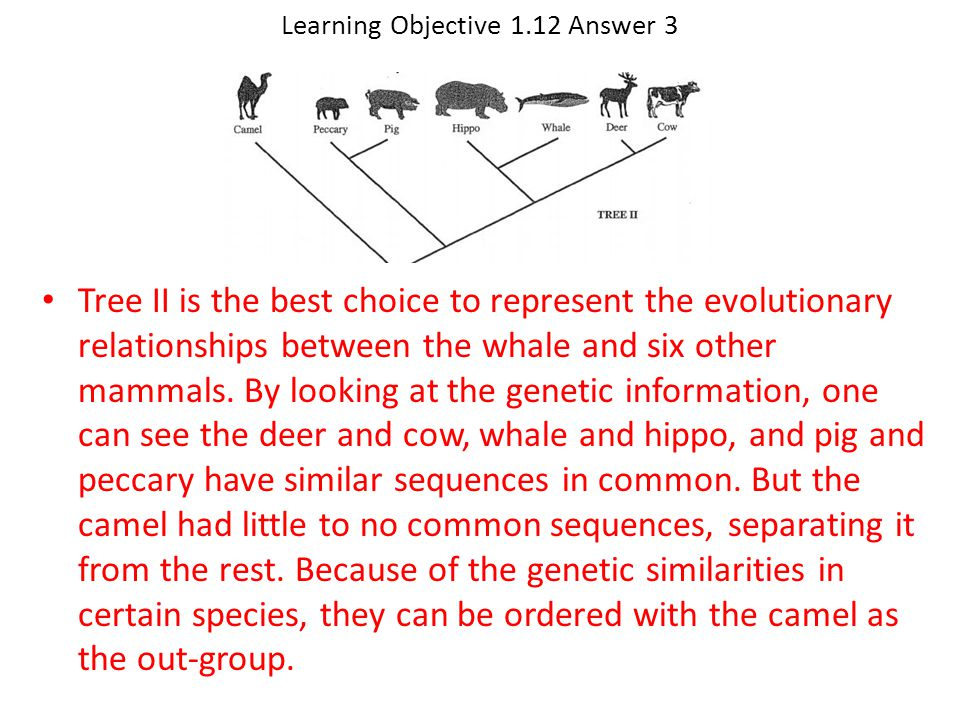 Learning Objective 1.12 Answer 3