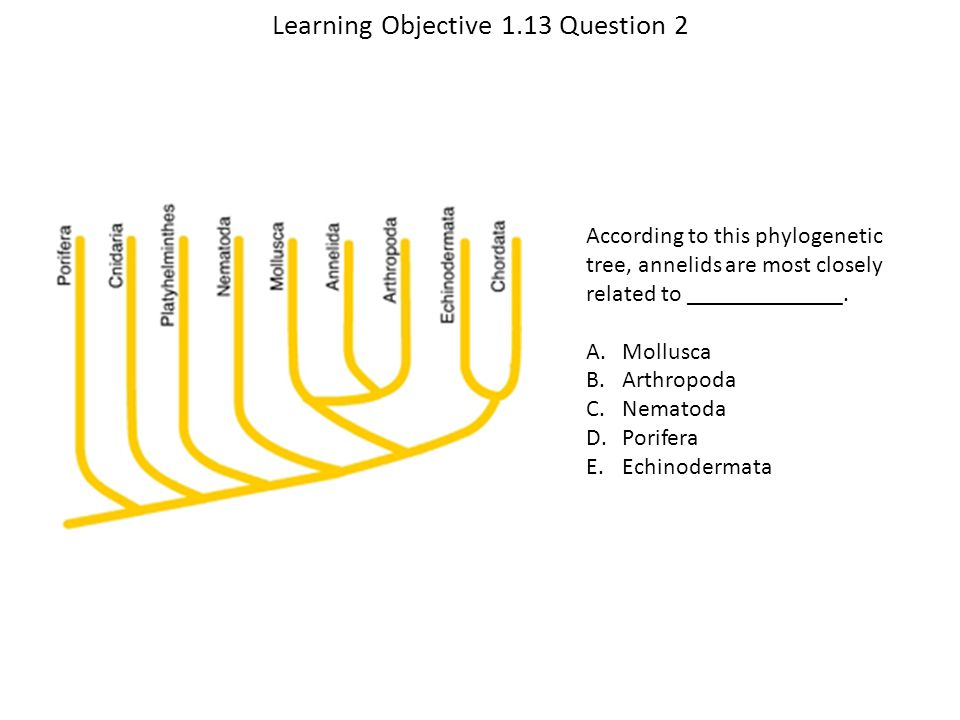 Learning Objective 1.13 Question 2