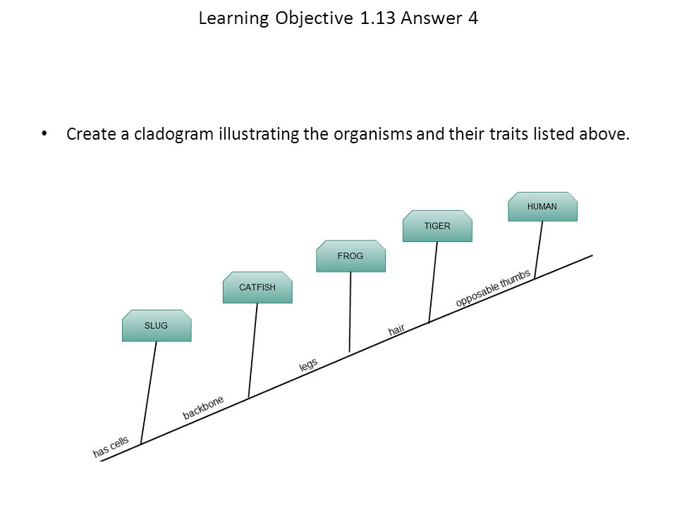Learning Objective 1.13 Answer 4