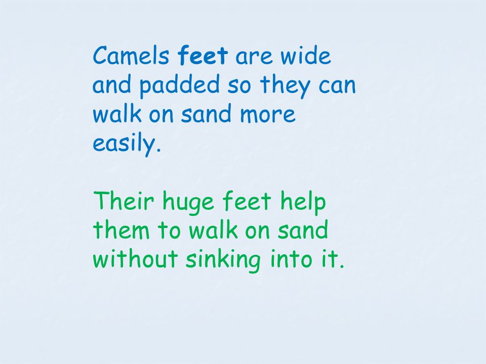 Camels feet are wide and padded so they can walk on sand more easily.