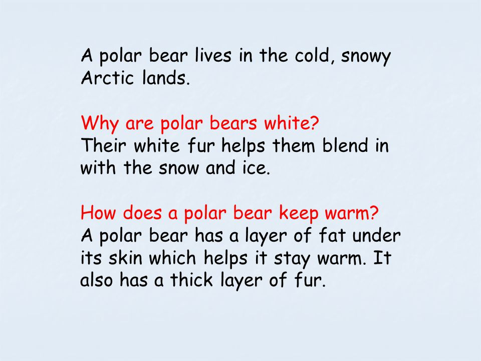 A polar bear lives in the cold, snowy Arctic lands.